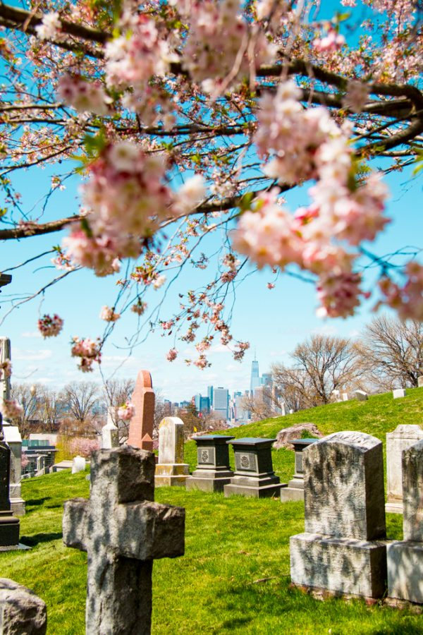 Graves and the NYC Skyline