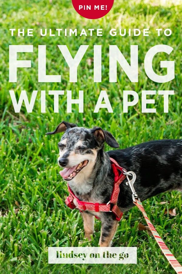 The Ultimate Guide to Flying With A Pet