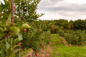 Apple_Picking_feature