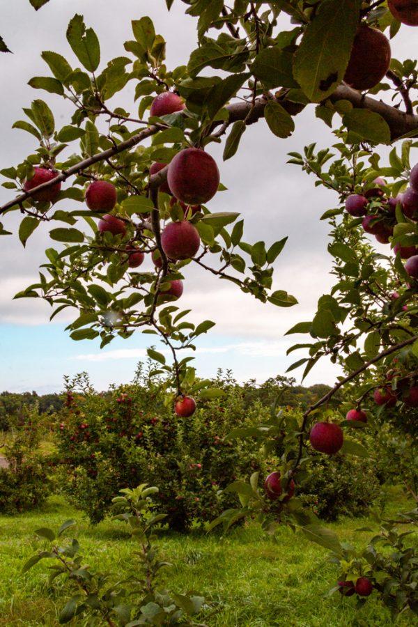 Wright's Farm Apple Orchard NY
