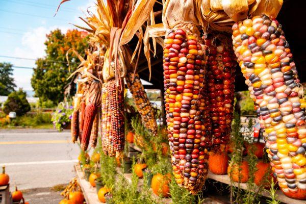 Wright's Farm Market NY