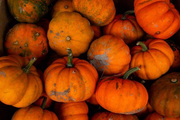 Pumpkins at Wright's Farm Market NY