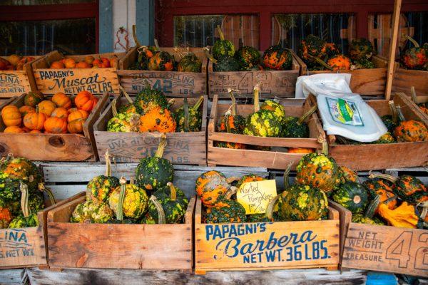 Gourds at Wright's Farm Market NY