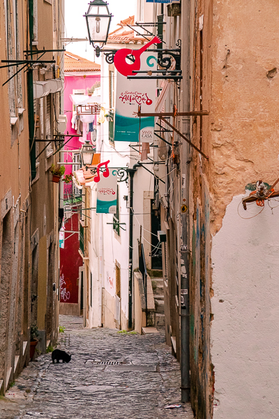 A cat on the streets of Alfama